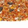 Pile of seed mixture for bird. Complete food for Lovebirds — Stock Photo #12184044