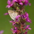 Butterfly and flower — Stock fotografie
