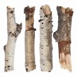 Set branch birch isolated on white background - Stock Photo