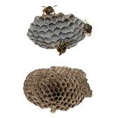 Makro arı larvaları beyaz zemin üzerine izole ile vespiary tarihinde — Stok fotoğraf