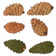 Pine cones collection isolated on white background, with clipping path — Stock Photo