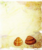 Sheet of old, soiled paper with shells background, grunge texture — Stock Photo