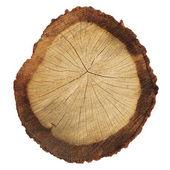 Ağaç gövdesi beyaz zemin üzerine izole kesiti — Stok fotoğraf