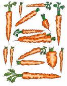 Set doodle color carrots background — Stock Photo