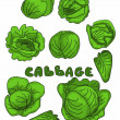 Set cabbage doodle background — Stock Photo