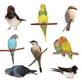 Set birds isolated on white background, texture — Stock Photo