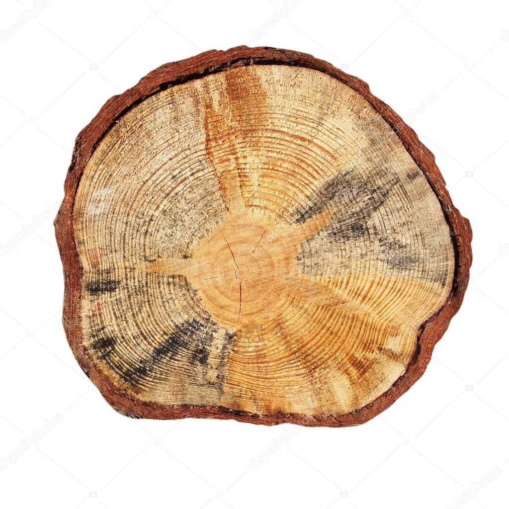 coupe transversale de tronc d 39 arbre isol sur fond blanc photographie dusan964 38110879. Black Bedroom Furniture Sets. Home Design Ideas