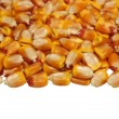 Pile corn isolated on white background, macro — Stock Photo