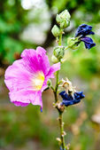 Vacker blomma — Stockfoto
