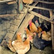 Chicken coop — Stock Photo #25666623