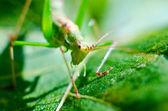 Bug macro — Stock Photo