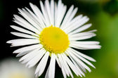 Macro fleur — Photo