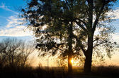Sunset behind a tree — Stock Photo
