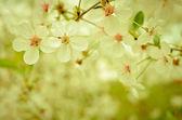 Flowering buds — Stock Photo