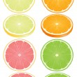 Citrus fruits - Stock Vector