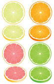 Citrus fruits — Stock Vector