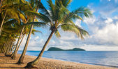 Tropical beach with palm trees — Stok fotoğraf