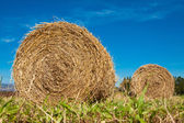 Hay bale rolls in a green field — Stockfoto