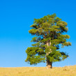 Lone tree on a hill — Stock Photo