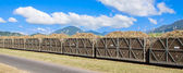 Cane train loaded with sugar cane — Stock Photo