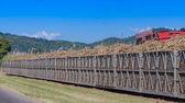 Trattore carico di zucchero di canna sul treno bin — Foto Stock