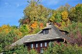 Sunny autumn — Stock Photo