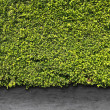 Green leaves wall and cement floor — Stock Photo