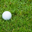 Golf ball on the green grass — Stock fotografie #29717415