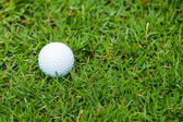Golf ball on the green grass — Стоковое фото