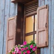 Stock Photo: Window and flower