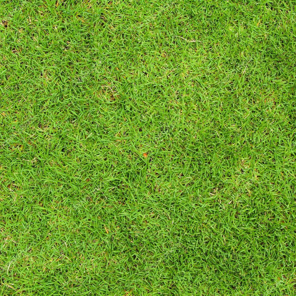 Fresh Green Grass Top View Stock Photo 169 Liewluck 36149173