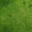 Green grass — Stock Photo #38050919