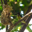 Bird (Olive-backed Sunbird) — Stock Photo #38052071