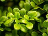 Ramo de folhas — Foto Stock