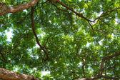 Pod drzewem — Zdjęcie stockowe