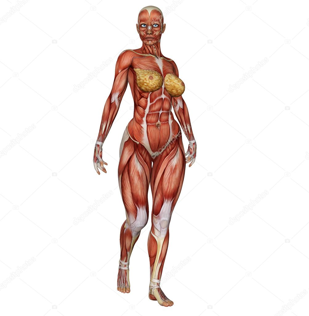 3D Female Medical Figure Showing Active Muscles When
