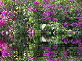 Tropical plants with a water reflection — Stock Photo