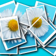 Collage,Bellis perennis,daisy in front of colorful background — Stock Photo