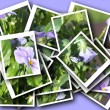 Collage of beautiful delicate flower — Stock Photo
