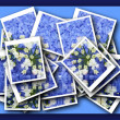 Single blossom colorful, modern, abstract set in scene — Stock Photo
