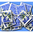Single blossom colorful, modern, abstract set in scene — Stock Photo #26749201