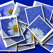 Single blossom colorful, modern, abstract set in scene — Stock Photo #26749605