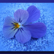 Single blossom colorful, modern, abstract set in scene — Stock Photo #26841233