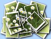 Single blossom colorful, modern — Stock Photo