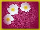 Jediného květu, barevné, moderní — Stock fotografie