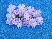 één bloesem kleurrijke, modern — Stockfoto