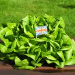 Green salad — Foto de Stock