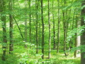 Las, Niemcy, północne Niemcy, — Zdjęcie stockowe