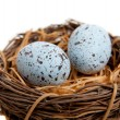 Two blue Robins Eggs in Nest-Decoration — Stock Photo