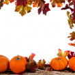 Border of Assorted sizes of pumpkins on hay on white — Stock Photo
